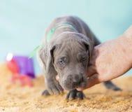 Puppy op het strand royalty-vrije stock fotografie