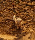 Puppy op het zand Stock Afbeeldingen
