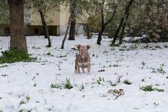 Puppy op sneeuw Stock Foto's