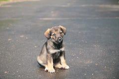Puppy op straat Stock Afbeeldingen
