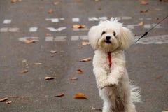 Puppy op twee benen stock foto