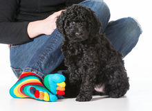 Puppy and owner Stock Images