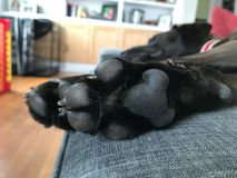 Puppy pads and claws. stock photography