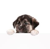 Puppy with paper Stock Image
