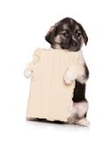 Puppy with paper. Cute puppy of 1,5 months old with a cardboard on a white background Stock Photos