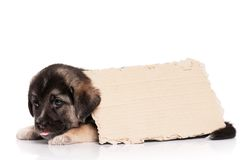 Puppy with paper Royalty Free Stock Photos