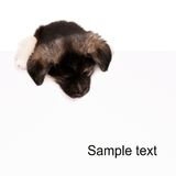 Puppy with paper Stock Photo