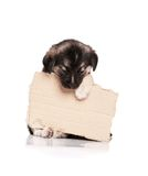 Puppy with paper Stock Photos