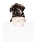 Puppy with paper Royalty Free Stock Photography