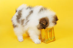 Puppy and parcel Royalty Free Stock Photos