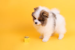 Puppy and parcel Stock Images