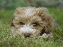 Puppy in the park Stock Image
