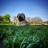 Puppy in the park. Dog laying in grass stock image