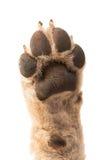puppy paw Stock Photos