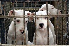Puppy in Perinaldo Stock Fotografie