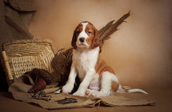 Puppy and pheasant Royalty Free Stock Image