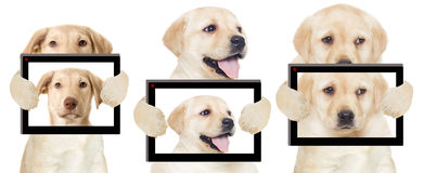 Puppy photos Stock Images