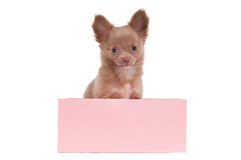 Puppy in a pink box Stock Images