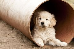 Puppy in a pipe Royalty Free Stock Photography