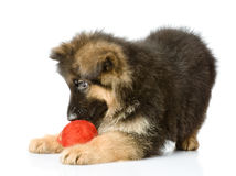 Puppy play with a wool ball. Royalty Free Stock Photography