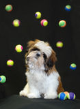 Puppy playing with balls Stock Photos