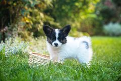 Puppy playing with a basket in the garden Royalty Free Stock Photography
