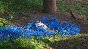 Puppy playing with blue net in nature stock video footage