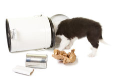 Puppy playing with garbage Stock Photography