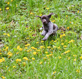 Puppy playing outside Stock Image