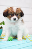 Puppy plays with a ball Royalty Free Stock Photo