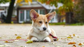 Puppy plays outdoors stock image