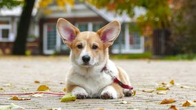 Puppy plays outdoors stock photos