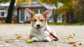 Puppy plays outdoors stock photo