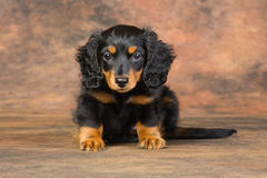 Puppy portrait Royalty Free Stock Photography