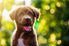 Puppy portrait with bokeh Royalty Free Stock Image
