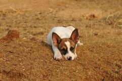 Puppy portrait Stock Photo