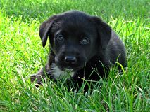 Puppy portrait Royalty Free Stock Images