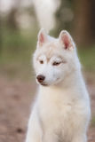 Puppy. Portrait on the tree in outdoor. Royalty Free Stock Photography