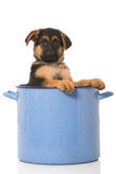 Puppy in a pot Stock Photography