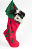 Puppy for present. Stock Photo