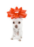 Puppy present Royalty Free Stock Image