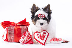 Puppy and present Royalty Free Stock Photography