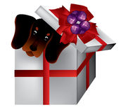 Puppy in present box. A cute puppy in a present box on white background stock illustration
