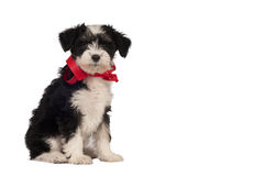 Puppy for present. Stock Photos