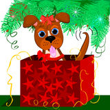 Puppy present. Cute puppy under the tree for a great Christmas present Royalty Free Stock Images
