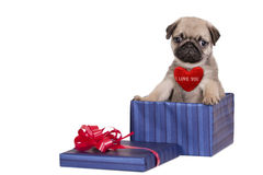 Puppy present Stock Images