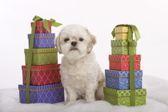 Puppy and presents Royalty Free Stock Images