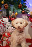 Puppy with presents. Cute little dog with christmas tree and presents Stock Image