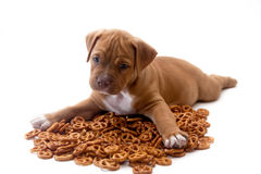 Puppy and pretzels. Dog  with crackers on isolate white background Royalty Free Stock Photos