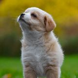 Puppy princess Royalty Free Stock Photos